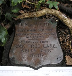 image of an original piece of oak from which the name selly oak was derived