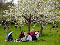 families with children sitting on grass under trees in full blossom