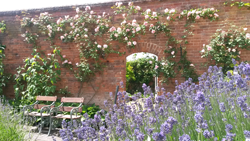 view across a border full of blue flowers to an open gateway in a high brick wall