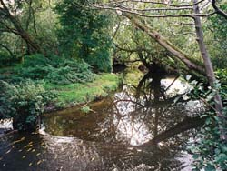 view of Moseley Bog associated with Tolkien